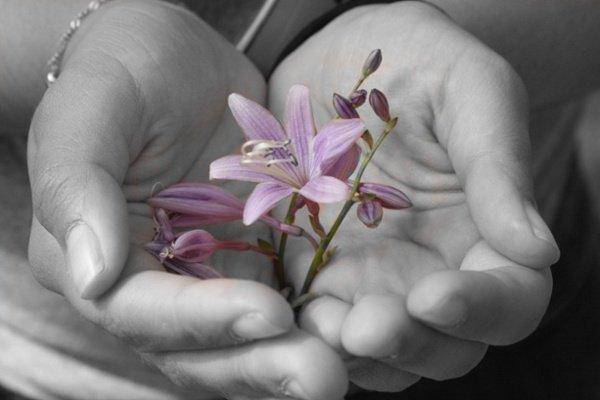revelar flor morada en la mano de la mujer
