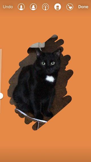 "Fondo naranja agregado a Instagram Historia de un gato negro ""width ="" 320 ""style ="" width: 320px; margin-left: auto; margin-right: auto"