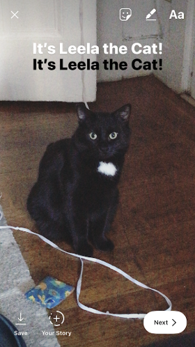 "Instagram Story of Leela the cat ""width ="" 280 ""style ="" width: 280px; margin-left: auto; margin-right: auto"