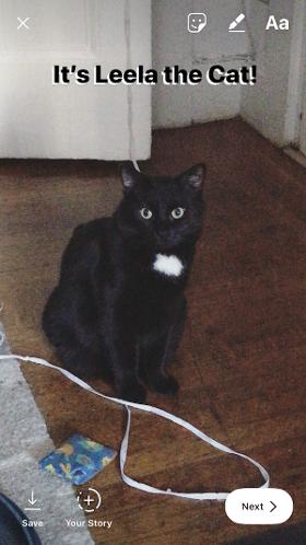 Instagram Story of Leela the cat con texto sombreado en blanco