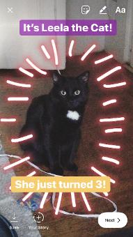 Instagram Historia de Leela, el gato con leyendas púrpuras y amarillas y diseño